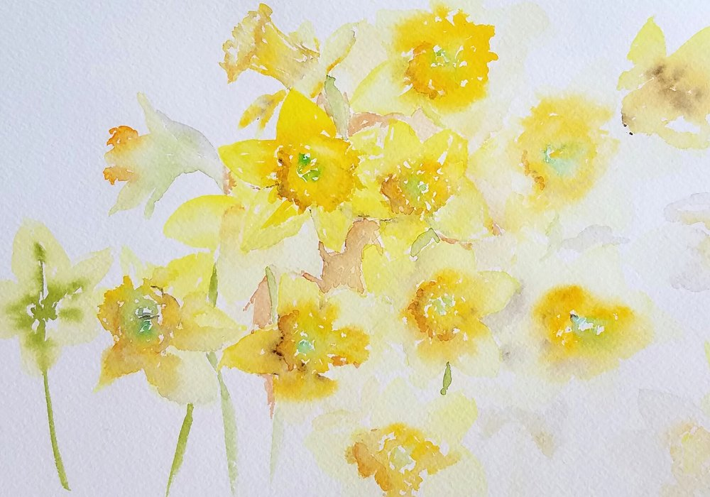 Daffodils; watercolor; 2017