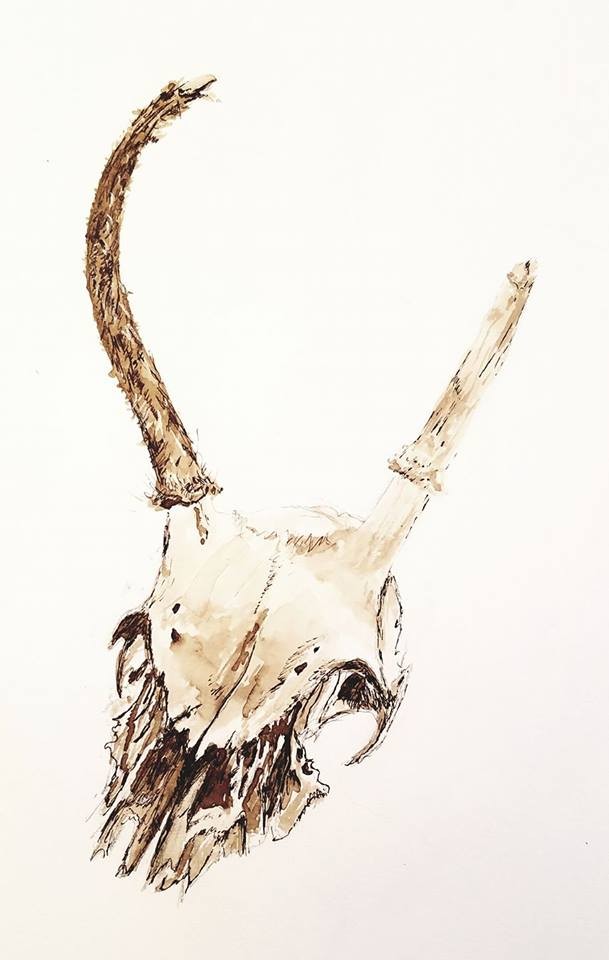Deer skull; black walnut ink; 2017