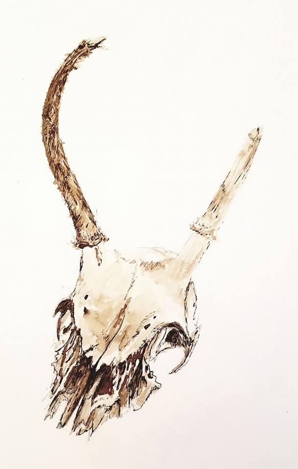 Deer skull; black walnut ink; 2017