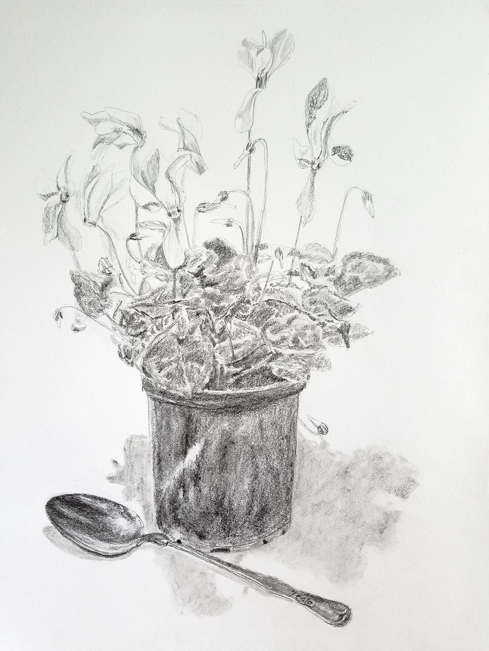 Cyclamen and Silver Spoon; graphite; 2017