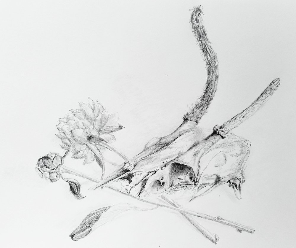 Deer skull and peonies; graphite; 2017