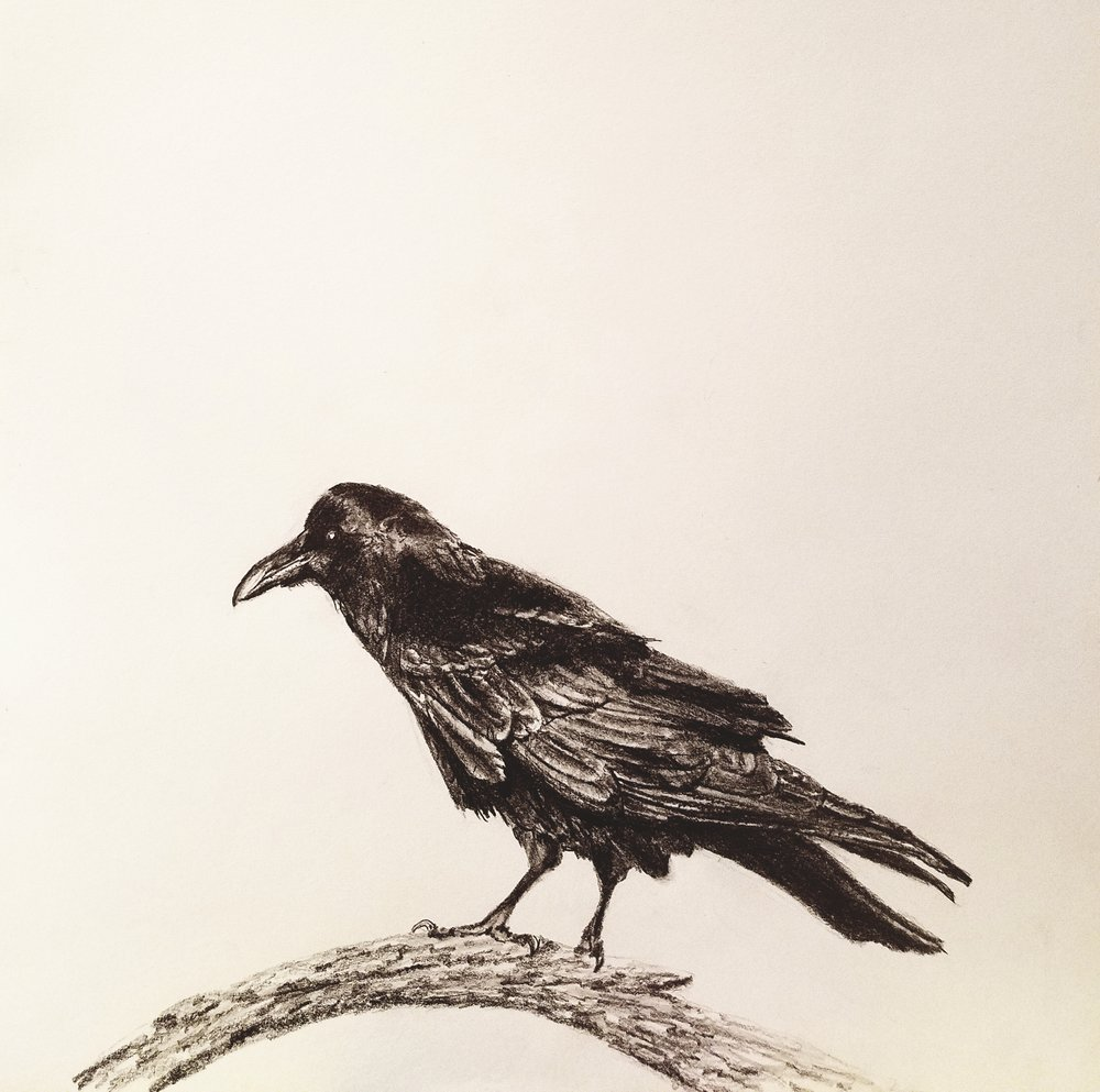 Crow on a branch; graphite; 2017