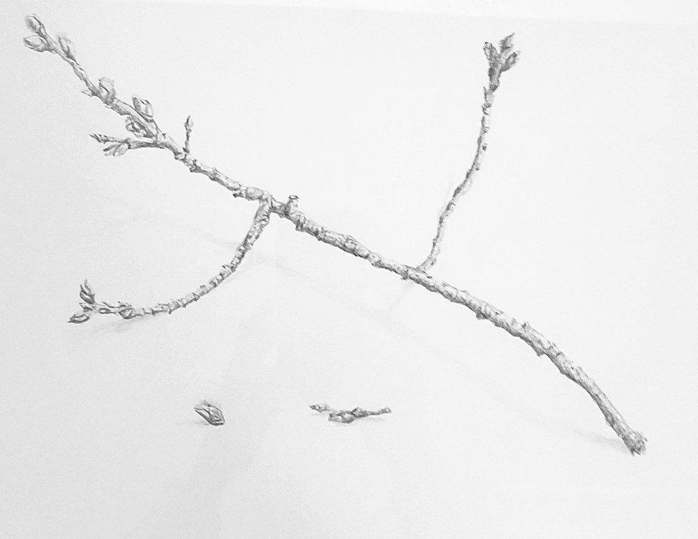Spring twig at Scotia Pond; graphite; 2017