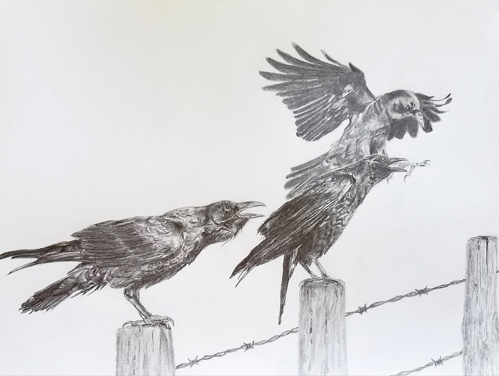 Crows; graphite; 2017