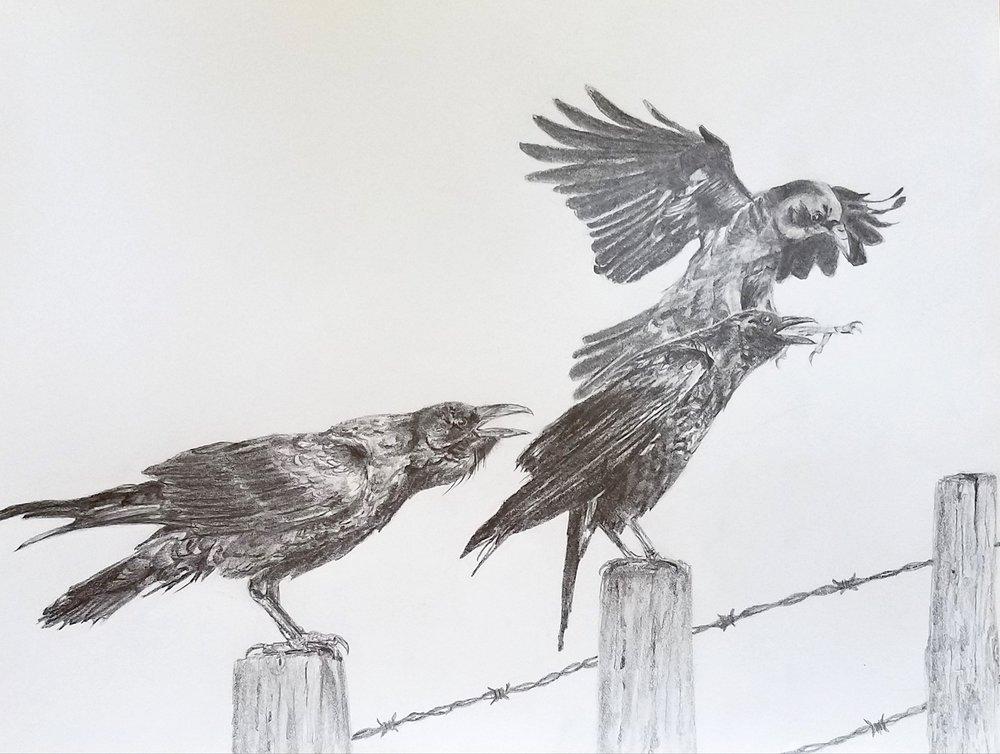 Crows; graphite; 2017