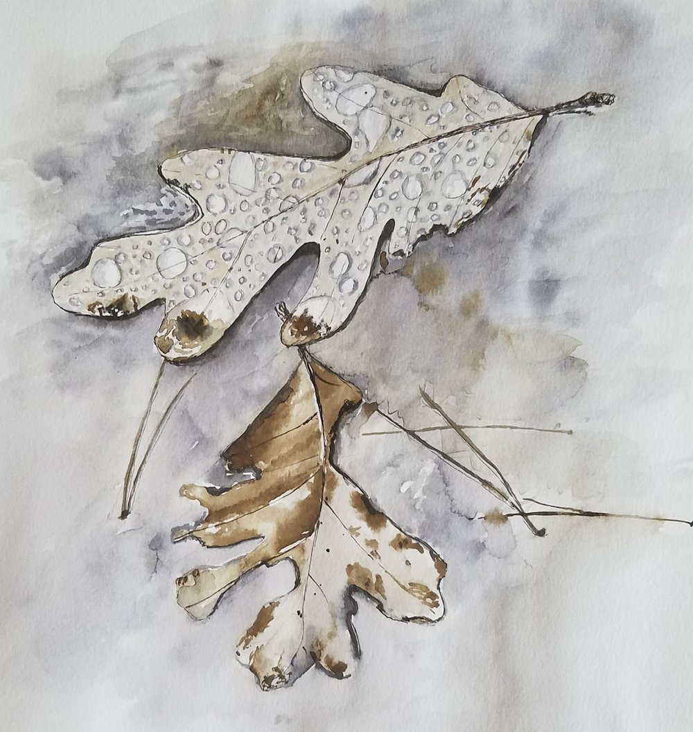 Fall leaves; pen and black walnut ink; 2017