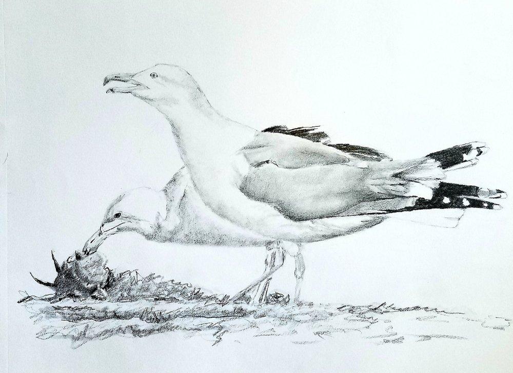 Seagulls; graphite; 2018