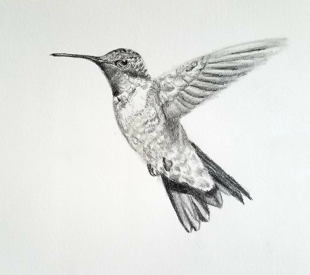 Ruby-throated Hummingbird; graphite; 2019