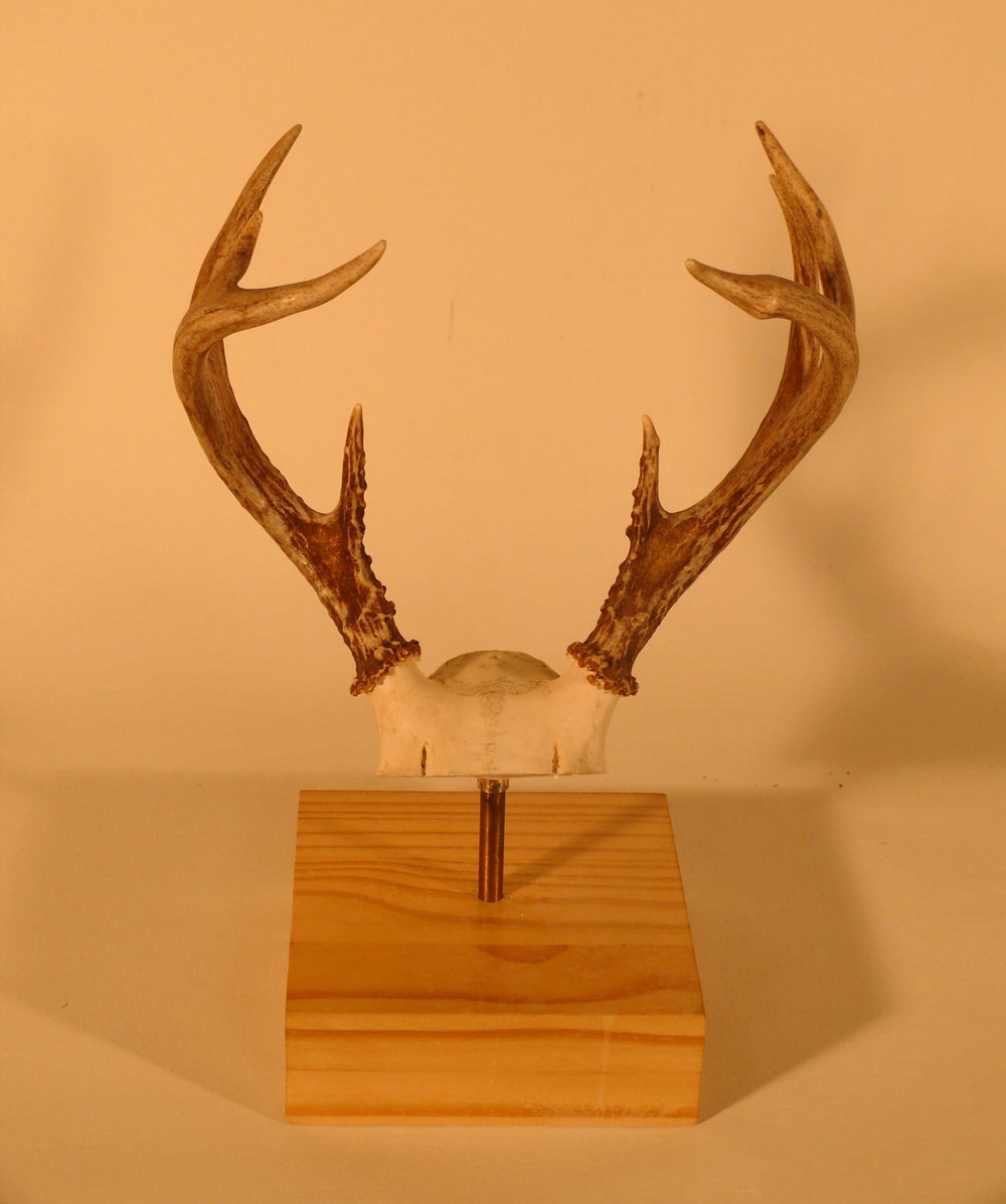 Set of 3 deer antlers mounted on wood base / sold individually or as a set