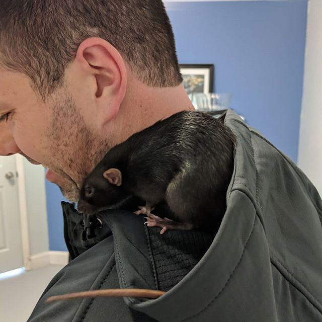 We made some very small friends today 🐀🐀