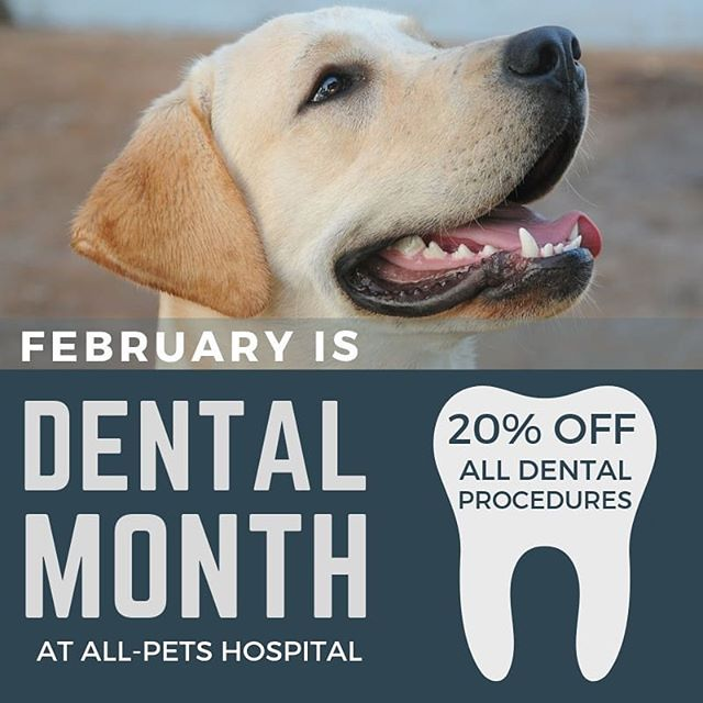 Dental health is more important than most pet parents realize. Bad dental hygiene doesn't just mean stinky breath, it means gingivitis, rotting teeth, and heart disease. Give your pet the gift of a long happy and healthy life by getting them in for regular dental cleanings. Give yourself the gift of doing in in February when it's cheaper!
