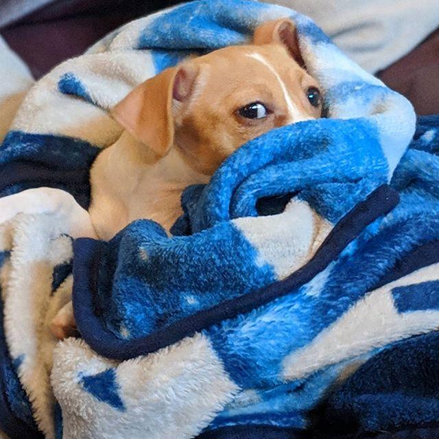 Our mood today  #dogsofdsm #itstoocold
