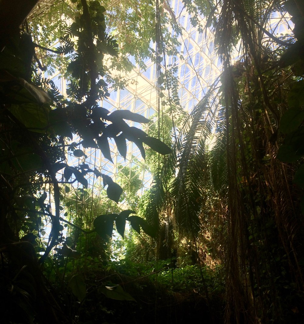The interior of the rainforest