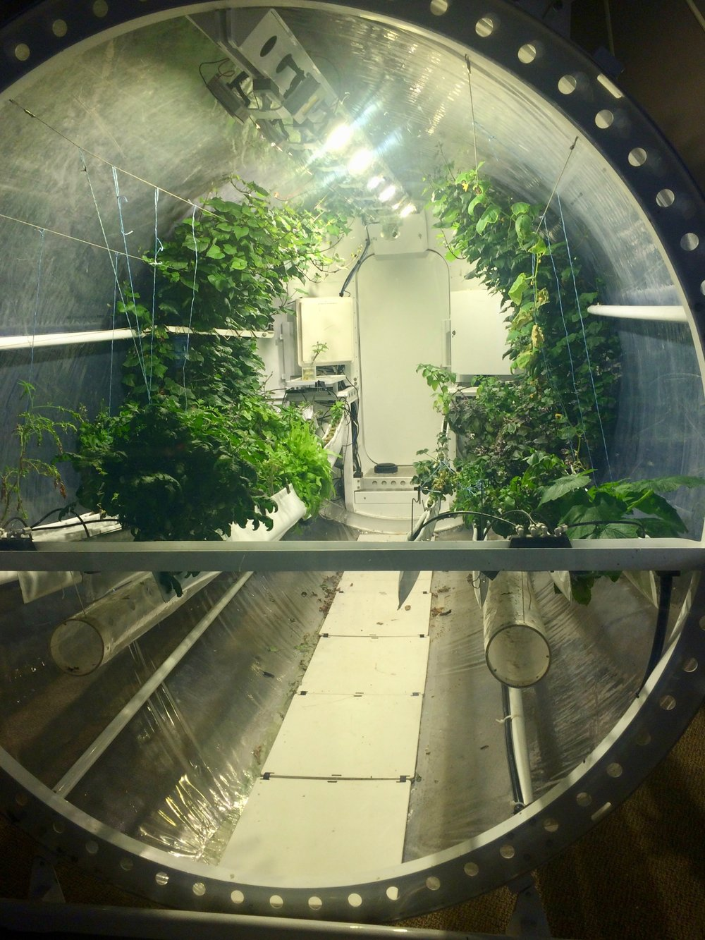 The lunar garden at Biosphere 2