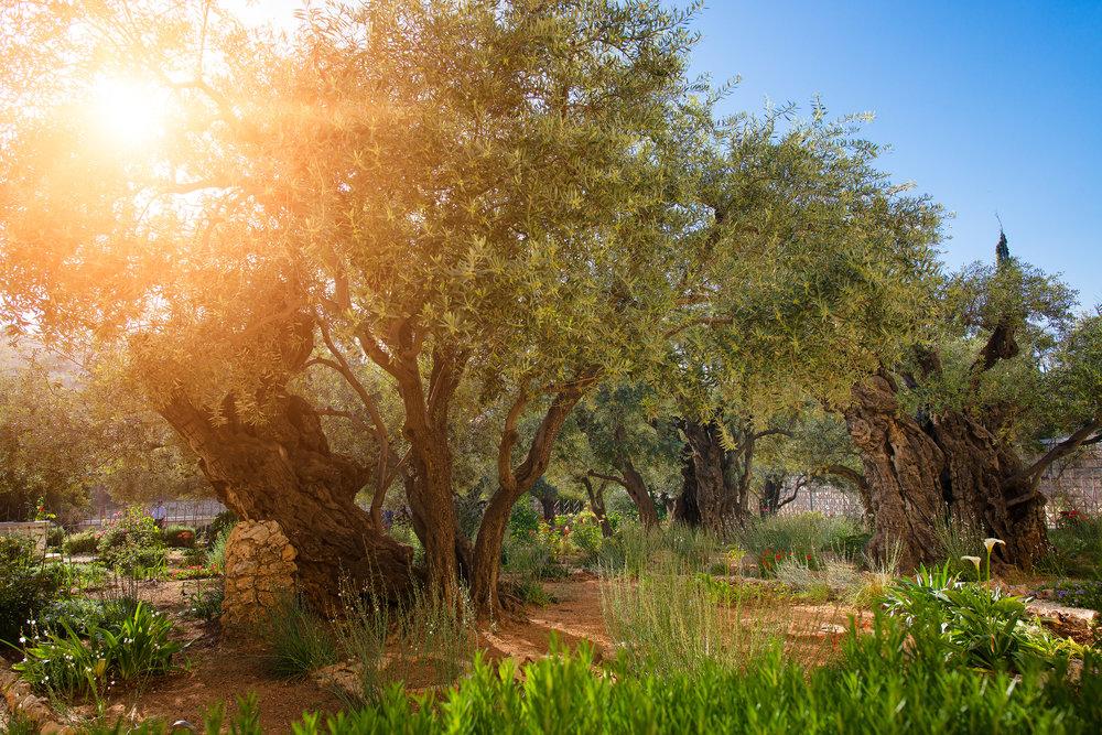 iStock-Gethsemane (3).jpg