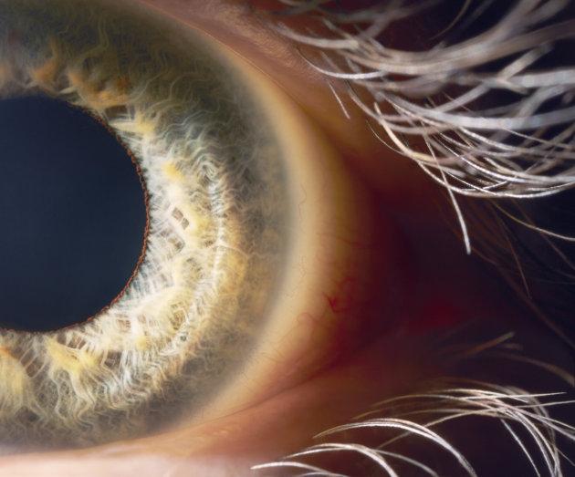 العين-البشرية.jpg