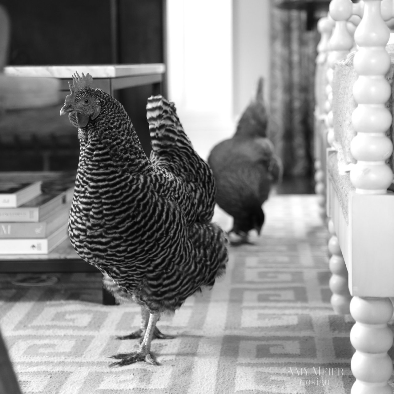 Amymeierdesign_s_lr chickens