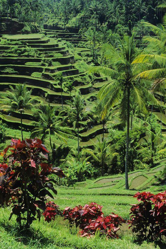 Tegalalang Tice Terrace, Ubud, Bali  Credit: William Waterfall