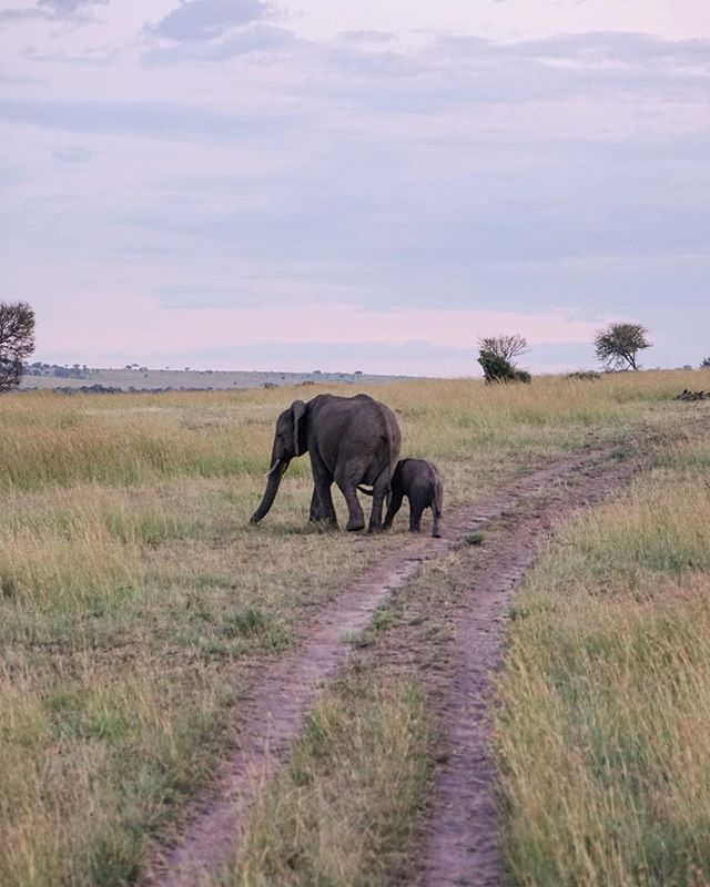 nothing about this trip has felt like real life because of how surreal each moment is. like stumbling upon a parade of elephants at sunset, then watching a mom and her baby drift away from the parade, for little moments of their own 💕#sheXexplores
