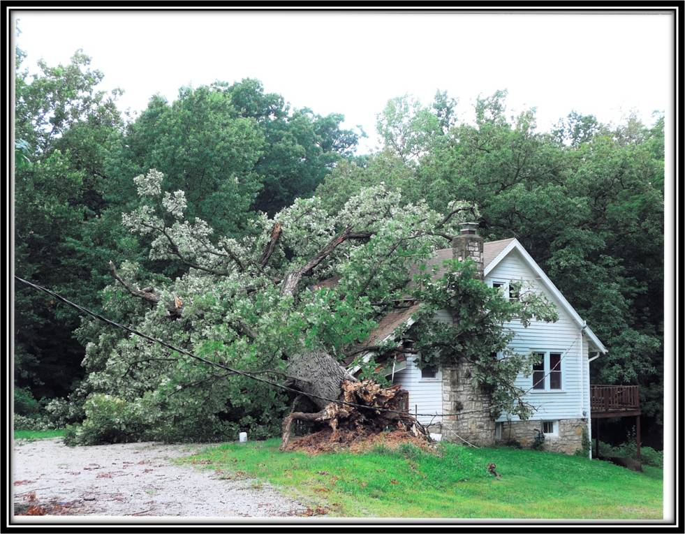 Tree Roof Home Damage Insurance Kansas