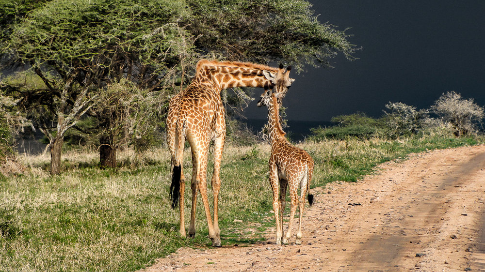 Mother Love on the Serengeti