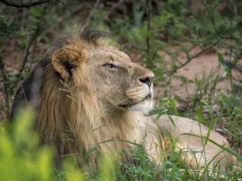 Lion-1030.jpg