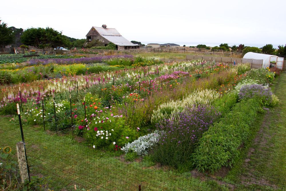 coastalfarm
