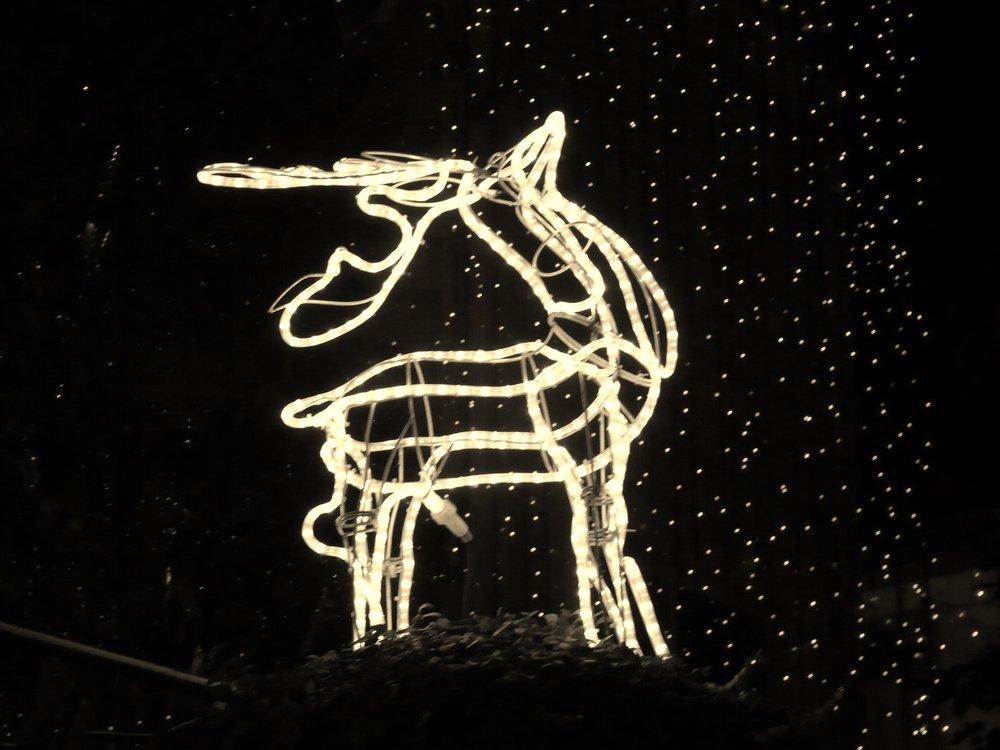 Christmas Deer (christmas hours).JPG
