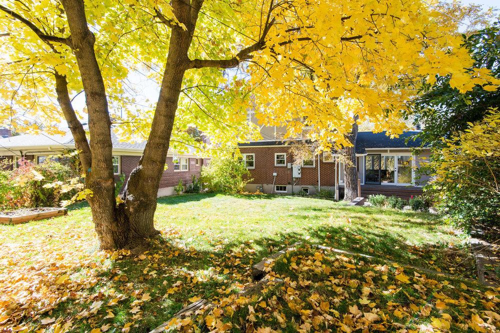 927 backyard.jpg