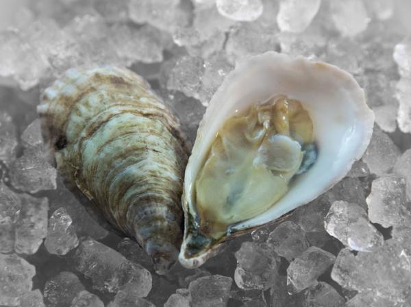 oysters jan 18_4 (1).JPG