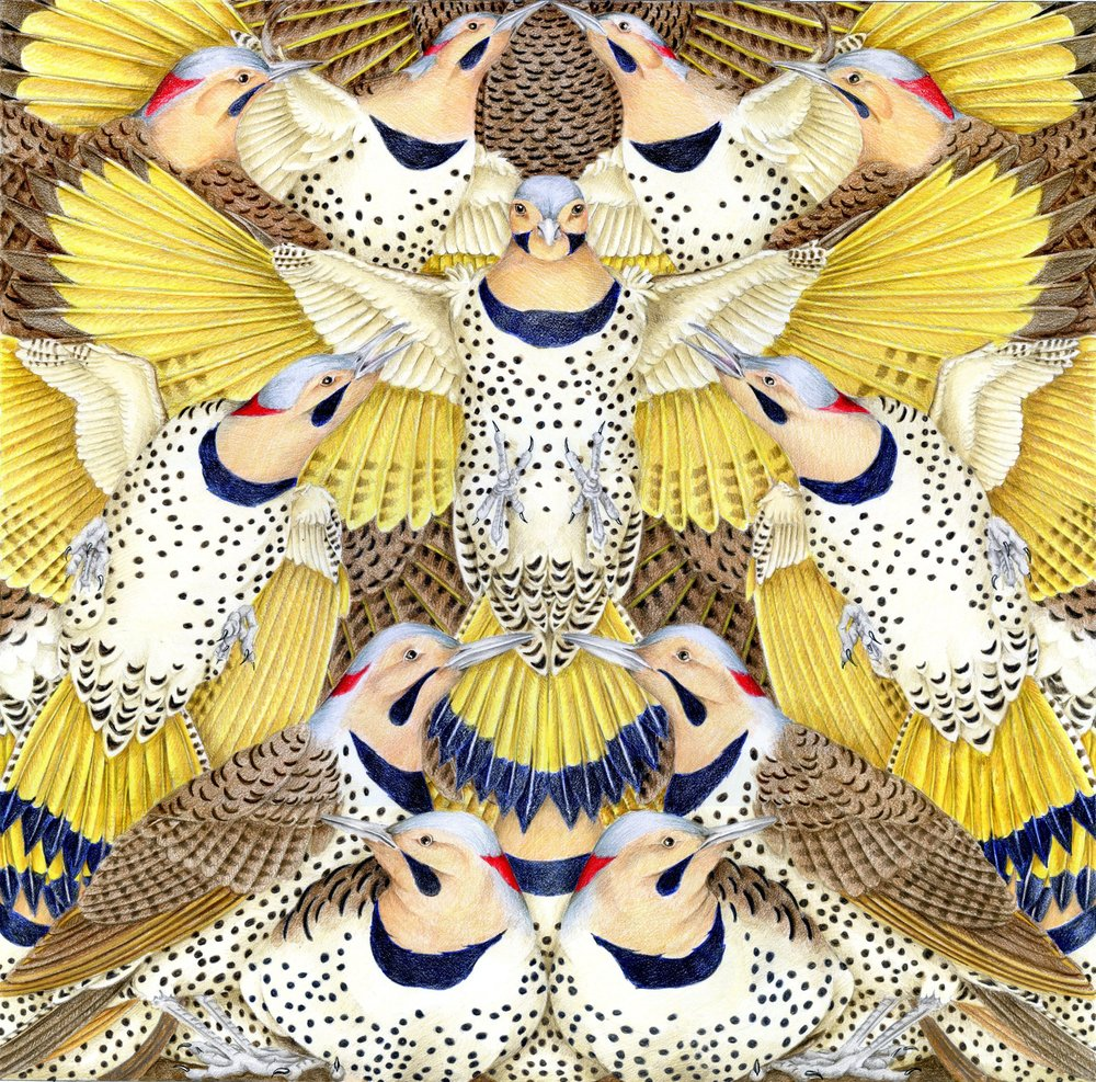 "Mary Lee Eggart, ""Yellow-Shafted Flickers,"" colored pencil and watercolors, 16 x 16 in., 2018"