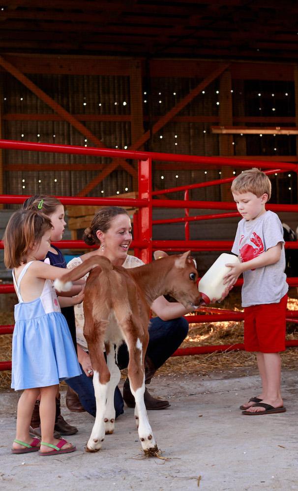 fawn view feeding-calf-copy.jpeg