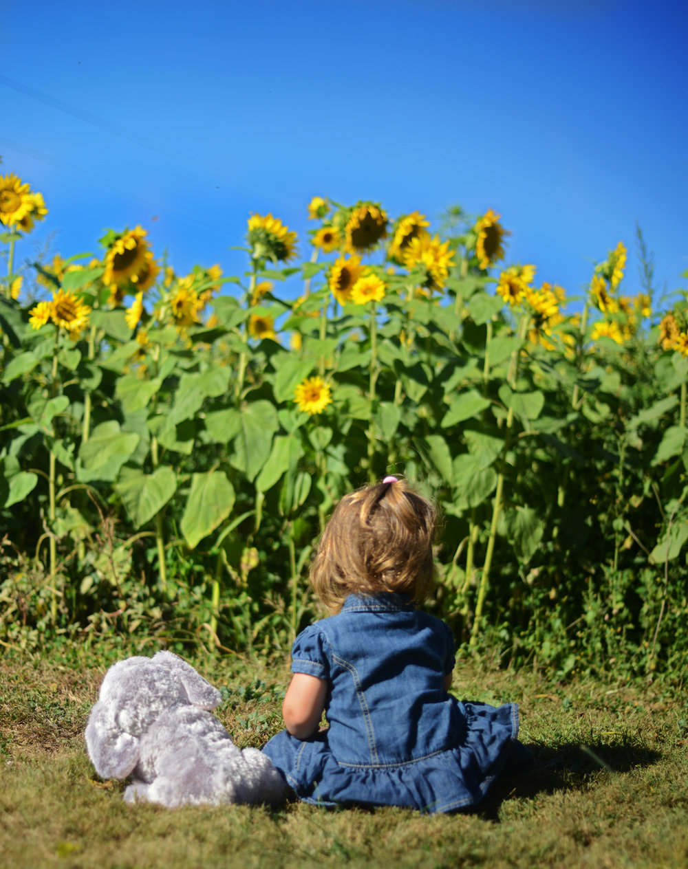 Lily and the Sunflowers copy.jpg