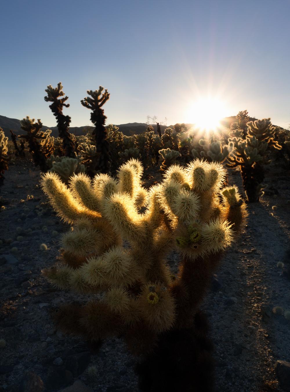 Sunray'd Cactus.jpg