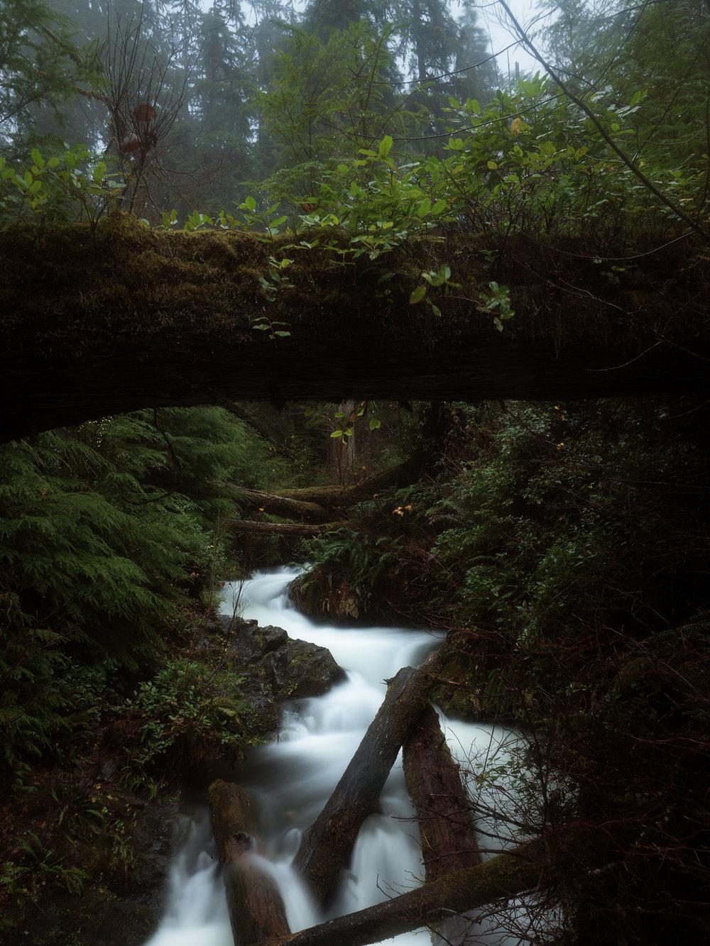 Quinault Falls.jpg