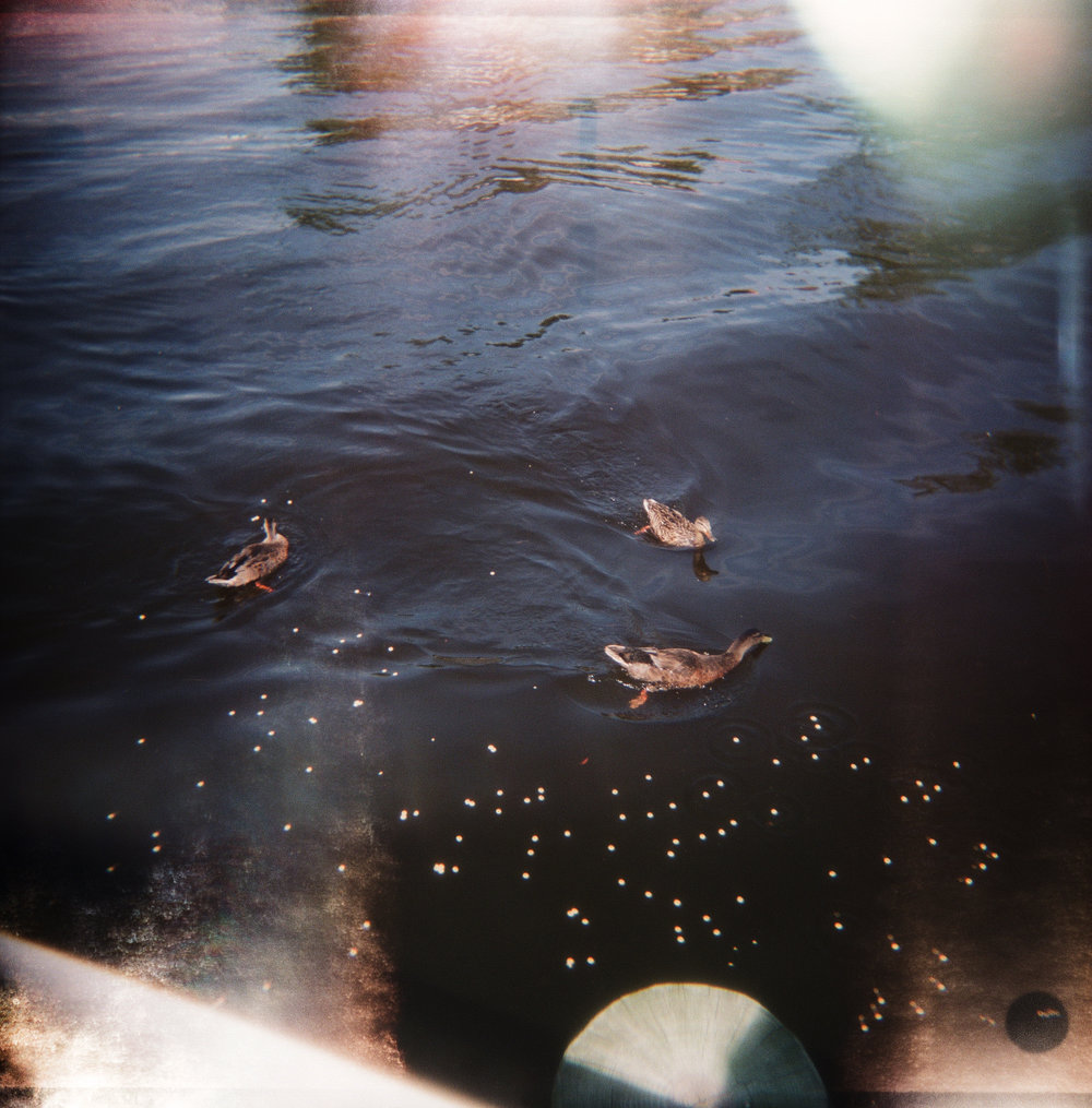 Ducks in the Lagoon, No 2, 2016