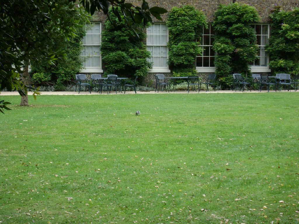 The park on a quieter day. Image: Flickr/paddy75