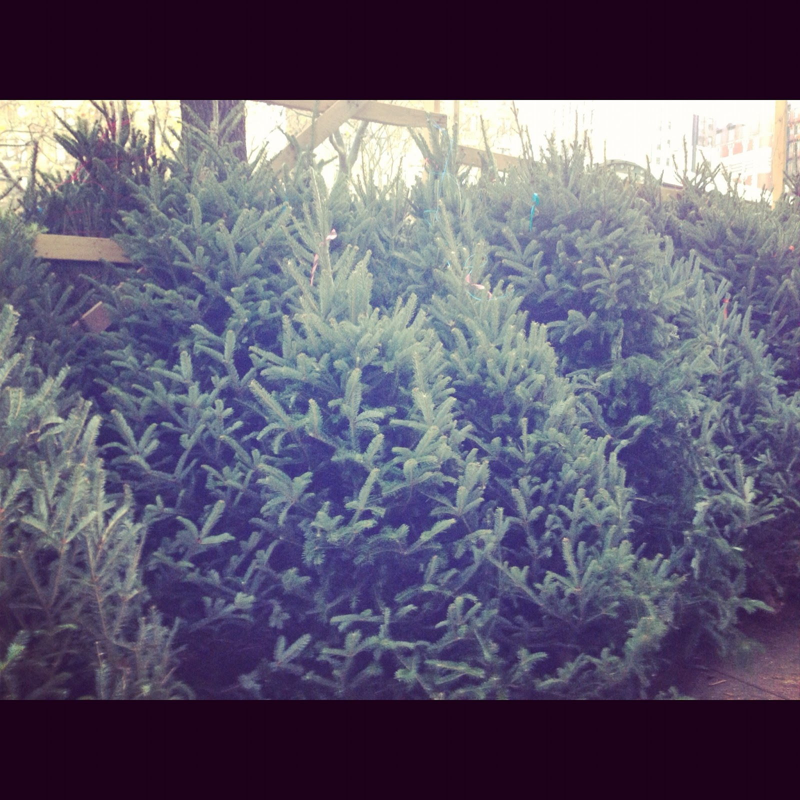 Christmas trees for sale on Broadway