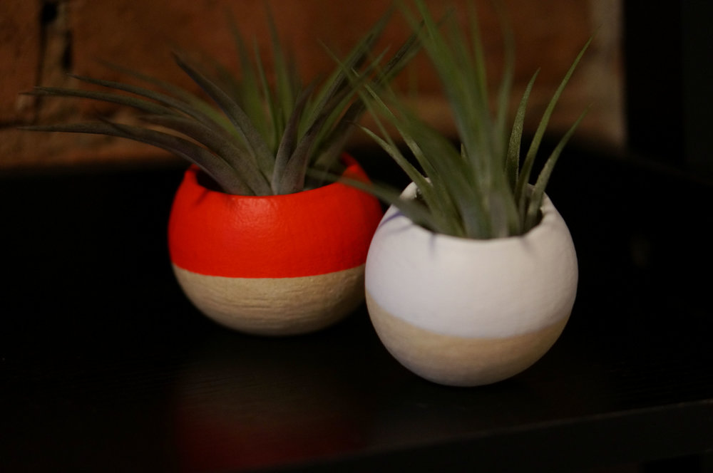 Air plants from Bird and Feather.