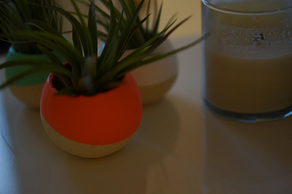 Air plants from Bird and Feather and a scented candle.