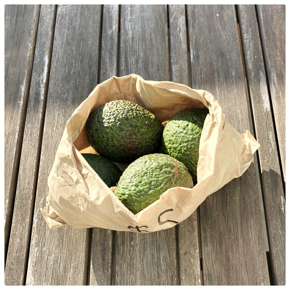 Organic avocados from an orchard down the road.