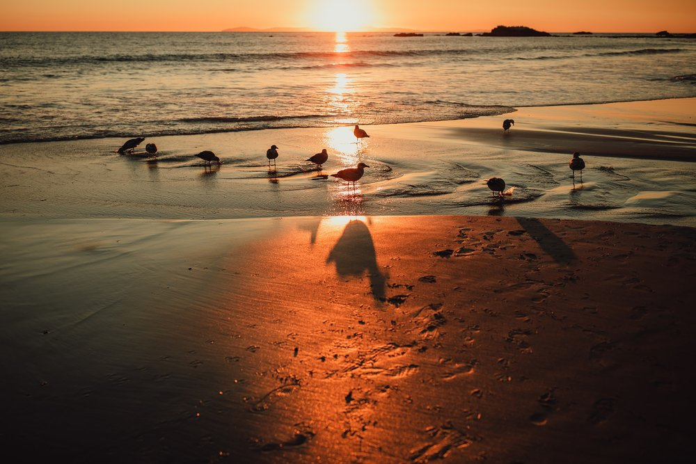 birds in puddle at beach during sunset | Whidbey Island family photographer