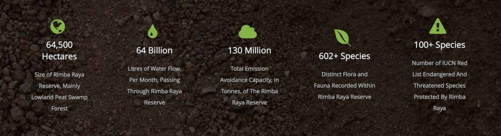 Image from rimba-raya.com