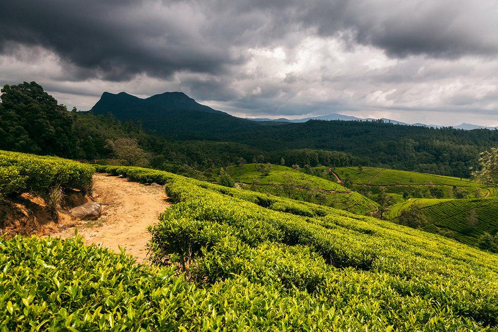 Sri Lanka.jpeg