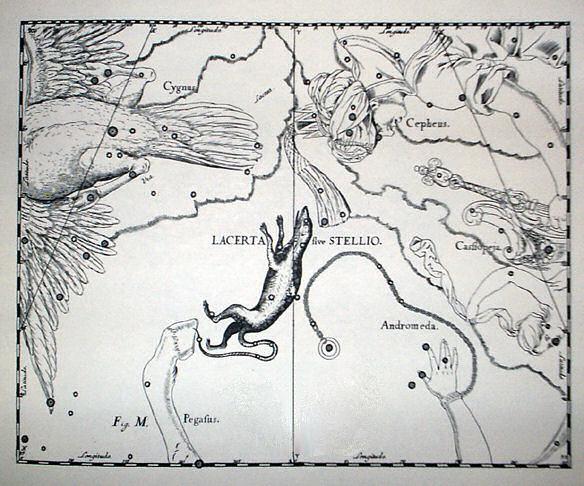 Lacerta  sive  Stellio   Da/ From : Johannes Hevelius, Firmamentum Sobiescianum sive Uranografia, Gdansk 1690 Incisione a bulino/E ngraving