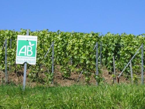 vignes-bio-ouvertes-2013-decouvrez-3-domaines-biologiques.jpg