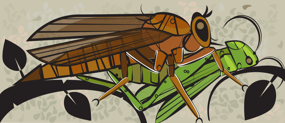 The Hornet Robber Fly