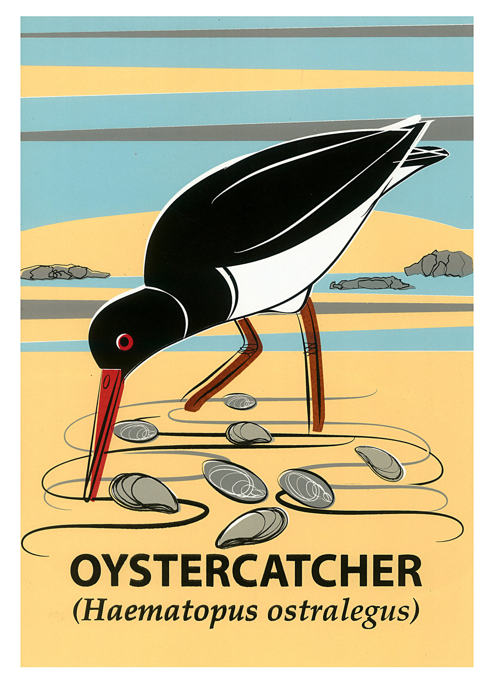 Limited Edition Oystercatcher Screenprint