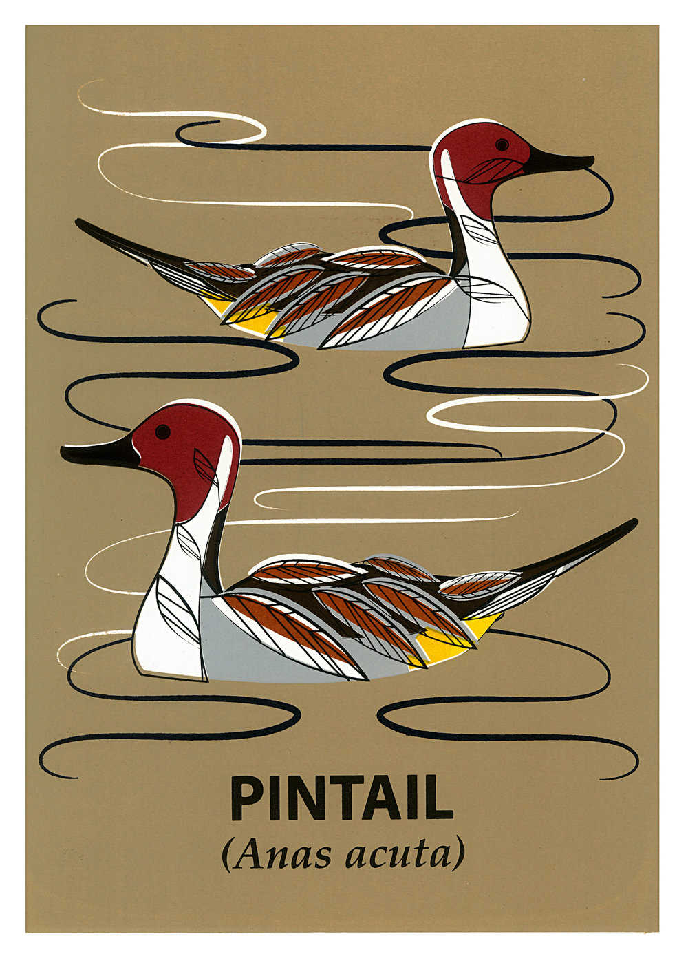 Limited Edition Pintail Screenprint