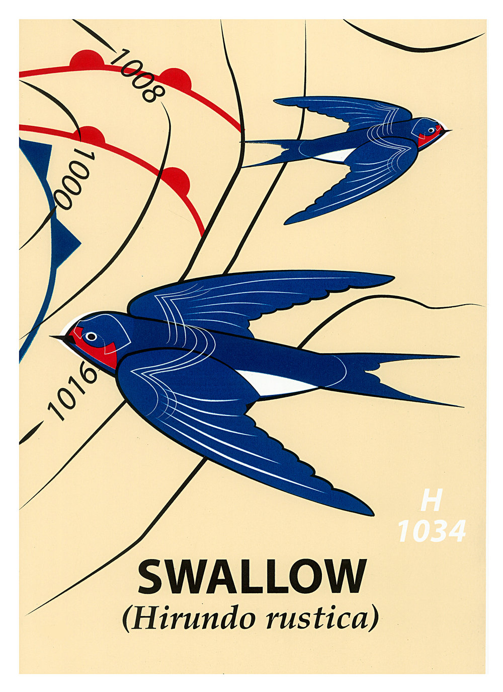 Limited Edition Swallow Screenprint